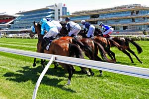 Flemington Horses Bunched