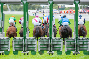 Horse racing barriers 2